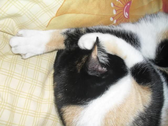 Shake - pisica noastra - Pagina 7 SDC12051