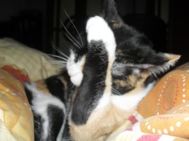 Shake - pisica noastra - Pagina 7 SDC12057