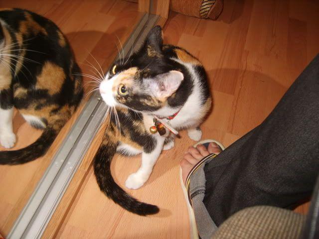Shake - pisica noastra - Pagina 3 S8006450