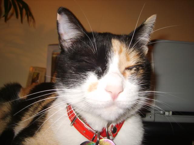 Shake - pisica noastra - Pagina 4 S8006502