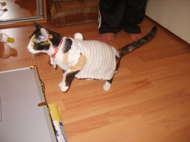 Shake - pisica noastra - Pagina 4 S8006656