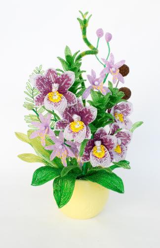 """Поздравляем победителей конкурса """"Оранжерея. Орхидеи""""! _af53e40072766b954ae2ef50d870da06"""