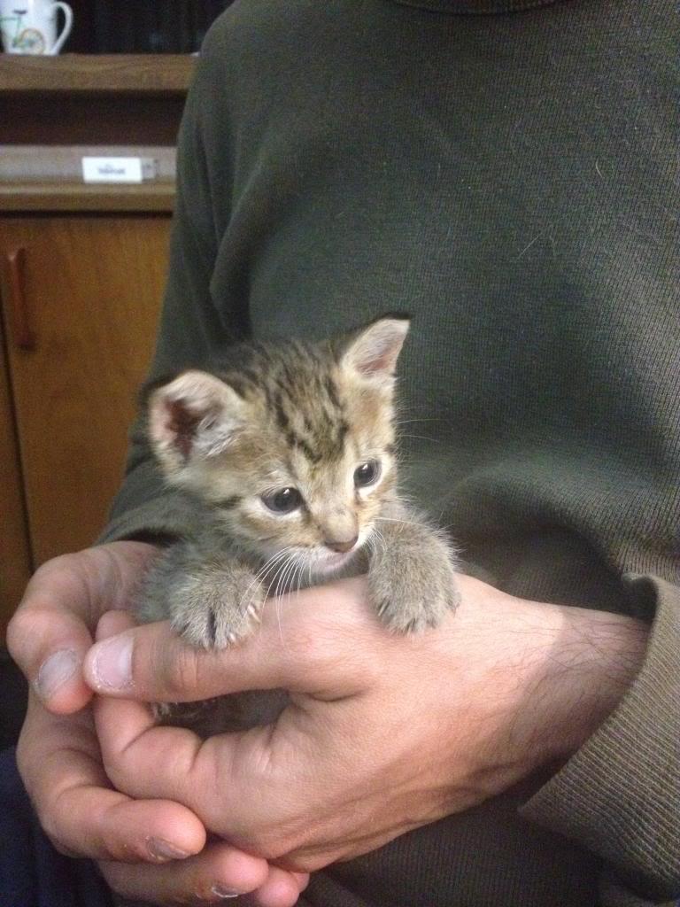 Χαριζονται 2 μωρακια γατακια 1 μηνος %204_zpsqcgrvsxe