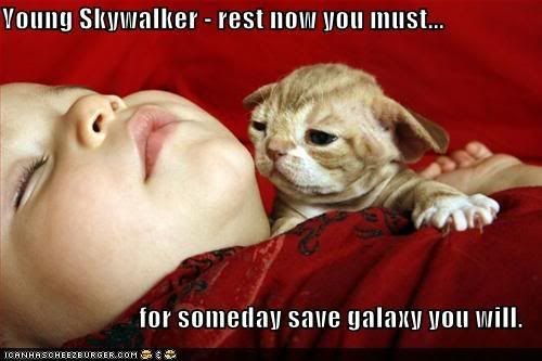 Funny pictures Catandyoda