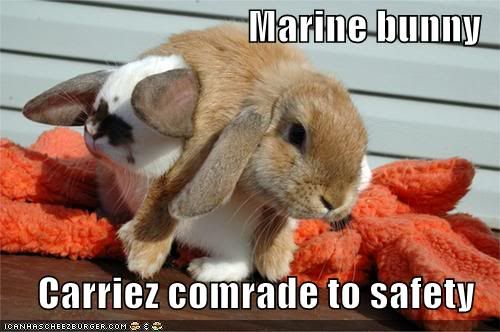 Funny pictures Marine20bunny