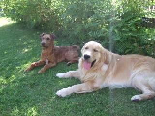hunder og venner DSCF6933