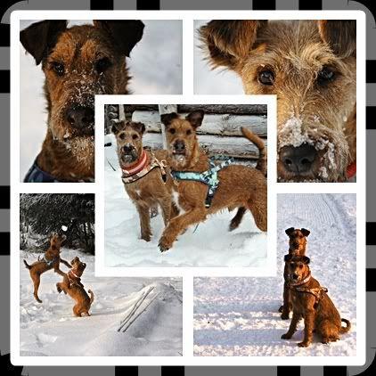 Peicos bilder Hundene-1