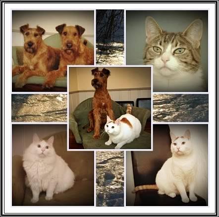 hunder og venner Montasje