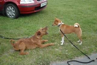 hunder og venner Oppdal013