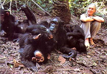 Mujeres destacadas en la historia 45_janegoodall-and-chimps_behavior