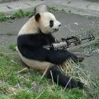 Osama Bin Laden Panda