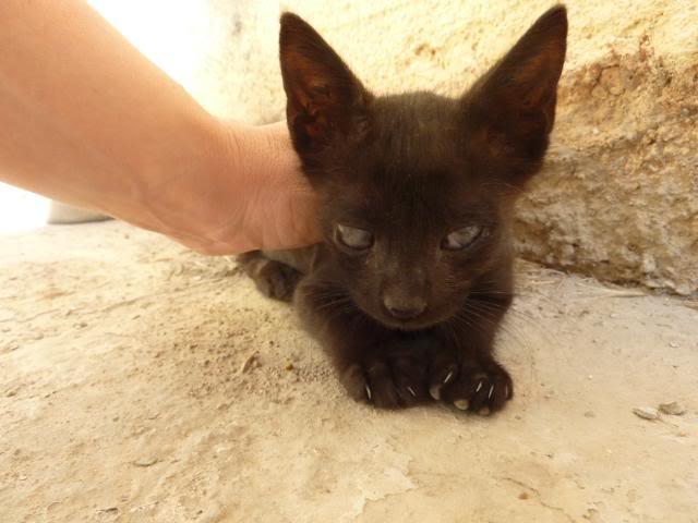 Βρήκα γατακι... - Σελίδα 2 001-1