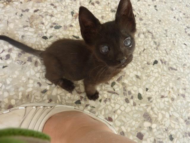 Βρήκα γατακι... - Σελίδα 2 010-2