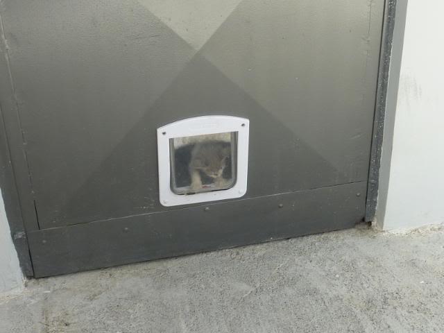 πάλι μου αφήσανε γατάκι, αυτη τη φορά στην πυλωτή - Σελίδα 2 030
