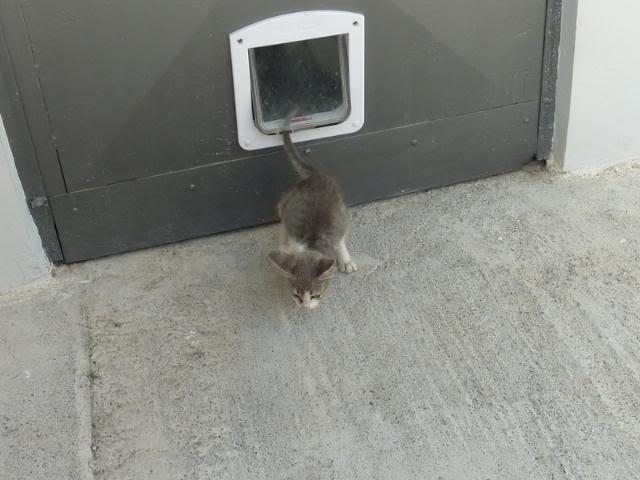 πάλι μου αφήσανε γατάκι, αυτη τη φορά στην πυλωτή - Σελίδα 2 031
