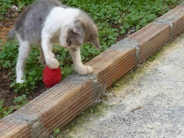 πάλι μου αφήσανε γατάκι, αυτη τη φορά στην πυλωτή - Σελίδα 2 057