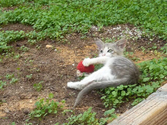 πάλι μου αφήσανε γατάκι, αυτη τη φορά στην πυλωτή - Σελίδα 2 059