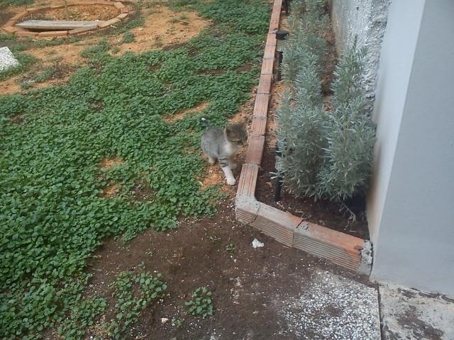 Το γατάκι που δεν έχει πατουσάκι DSC00019