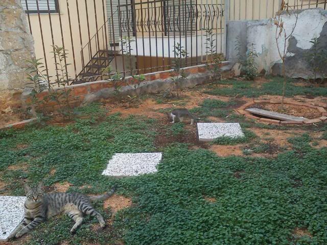 Το γατάκι που δεν έχει πατουσάκι DSC00022
