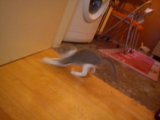πάλι μου αφήσανε γατάκι, αυτη τη φορά στην πυλωτή - Σελίδα 5 DSC00045