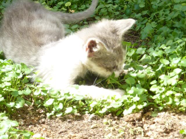 πάλι μου αφήσανε γατάκι, αυτη τη φορά στην πυλωτή - Σελίδα 2 MEMO0019
