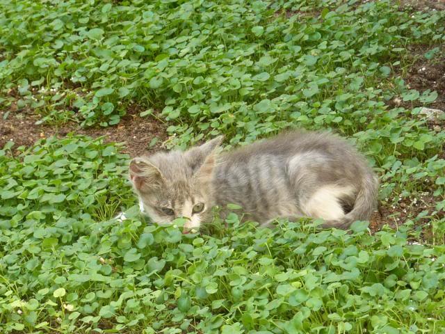 πάλι μου αφήσανε γατάκι, αυτη τη φορά στην πυλωτή - Σελίδα 2 MEMO0022