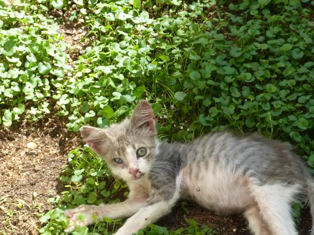 πάλι μου αφήσανε γατάκι, αυτη τη φορά στην πυλωτή - Σελίδα 2 MEMO0024