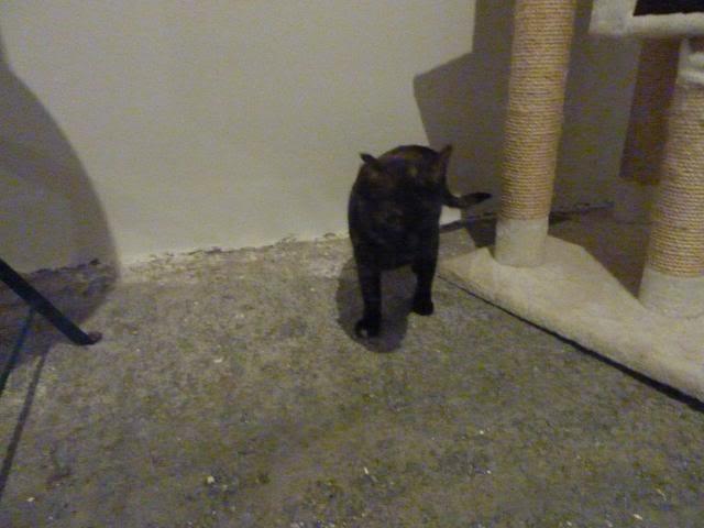 Πώς να φέρω τη Λούσυ στο νέο σπίτι; P1010214