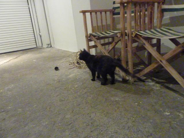 Πώς να φέρω τη Λούσυ στο νέο σπίτι; P1010215