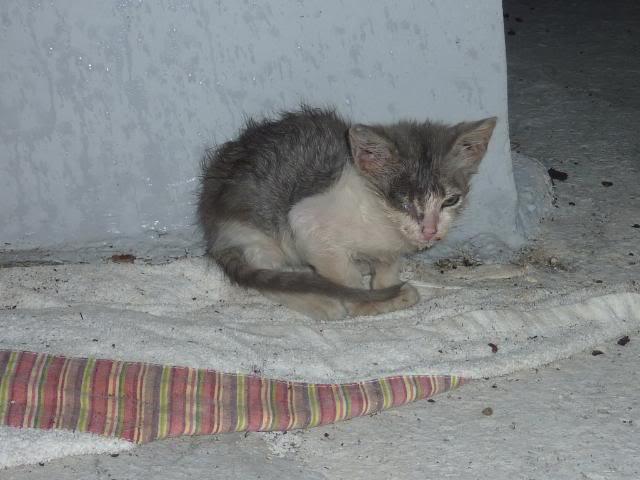 πάλι μου αφήσανε γατάκι, αυτη τη φορά στην πυλωτή P1010512