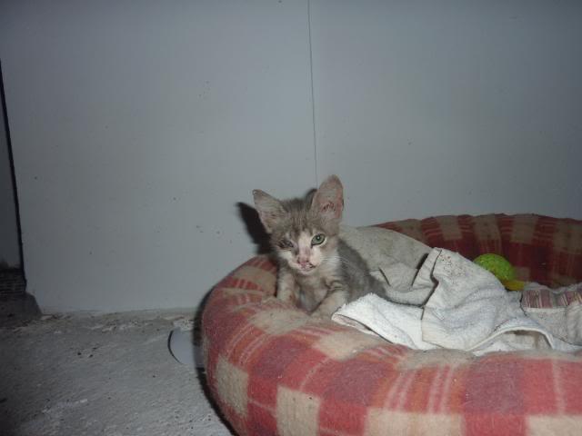 πάλι μου αφήσανε γατάκι, αυτη τη φορά στην πυλωτή P1010521