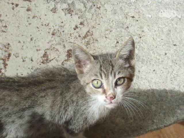 Το γατάκι που δεν έχει πατουσάκι - Σελίδα 2 P1010531