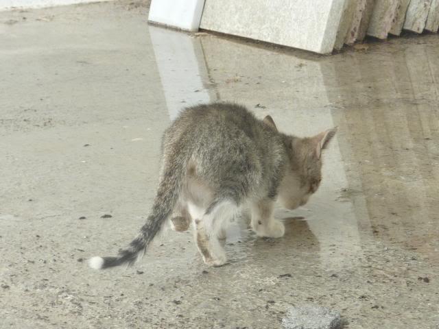 Το γατάκι που δεν έχει πατουσάκι - Σελίδα 2 P1010534