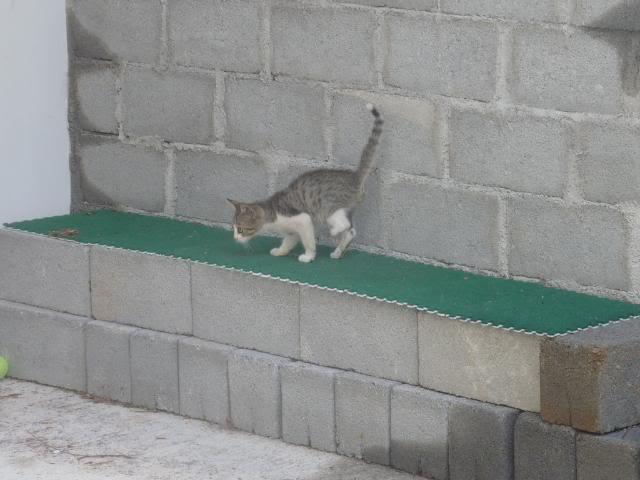 Το γατάκι που δεν έχει πατουσάκι - Σελίδα 2 P1010544