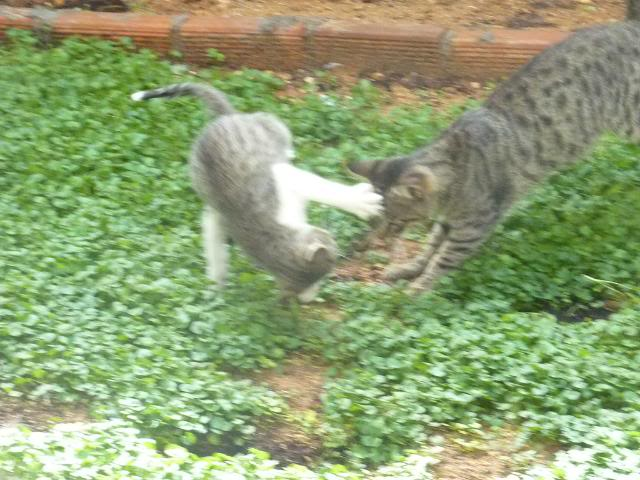 Το γατάκι που δεν έχει πατουσάκι - Σελίδα 2 P1010548