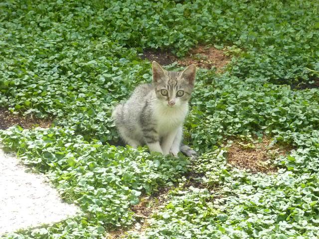Το γατάκι που δεν έχει πατουσάκι - Σελίδα 2 P1010550