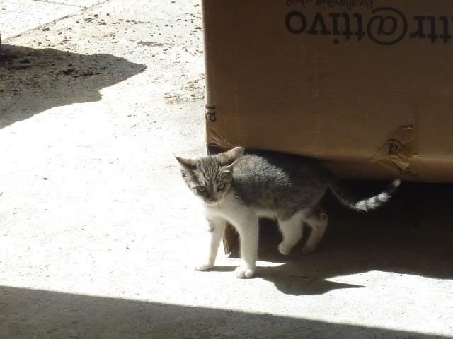 Το γατάκι που δεν έχει πατουσάκι - Σελίδα 2 P1010551