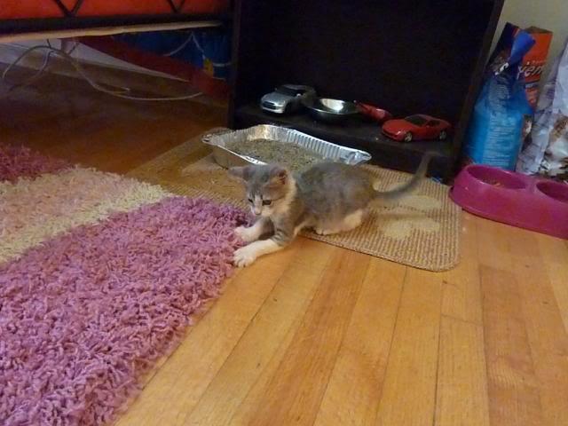 πάλι μου αφήσανε γατάκι, αυτη τη φορά στην πυλωτή - Σελίδα 5 P1010578