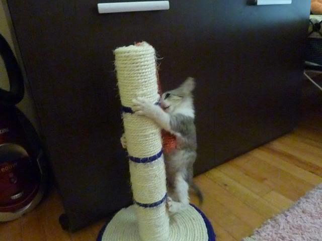 πάλι μου αφήσανε γατάκι, αυτη τη φορά στην πυλωτή - Σελίδα 5 P1010579