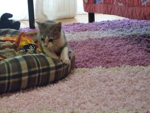 πάλι μου αφήσανε γατάκι, αυτη τη φορά στην πυλωτή - Σελίδα 5 P1010585