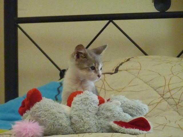 πάλι μου αφήσανε γατάκι, αυτη τη φορά στην πυλωτή - Σελίδα 6 P1010597