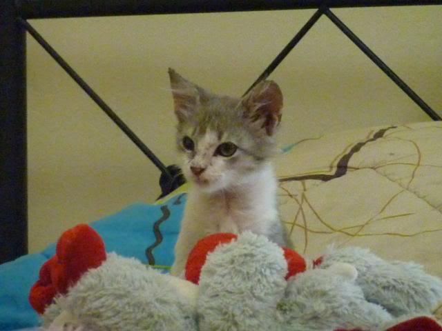 πάλι μου αφήσανε γατάκι, αυτη τη φορά στην πυλωτή - Σελίδα 6 P1010598