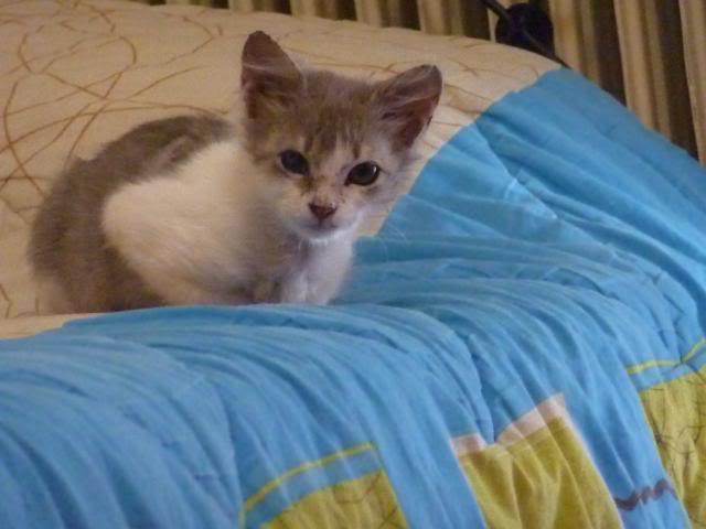 πάλι μου αφήσανε γατάκι, αυτη τη φορά στην πυλωτή - Σελίδα 6 P1010601