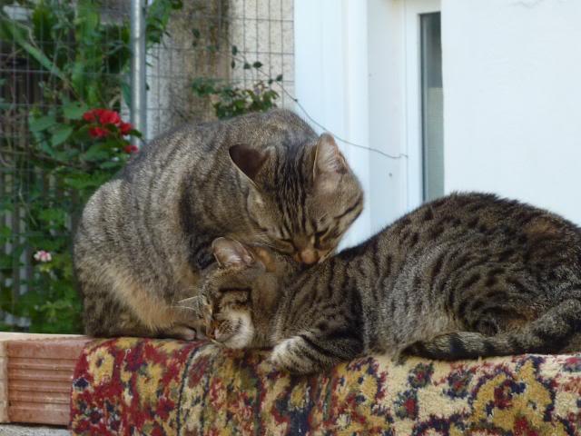 Η Λούσυ μας και η παρέα της - Σελίδα 19 P1010731