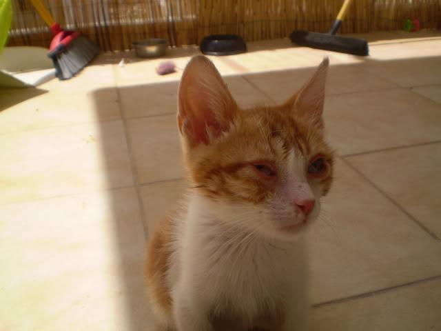 βρήκαμε γατούλη άρρωστο - Σελίδα 8 P6280169