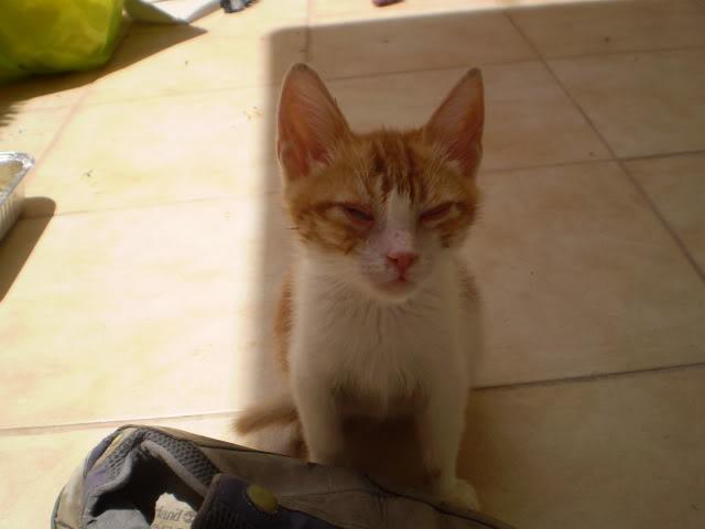 βρήκαμε γατούλη άρρωστο - Σελίδα 8 P6280172
