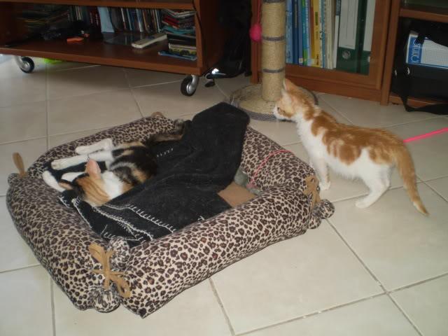βρήκαμε γατούλη άρρωστο - Σελίδα 10 P7100345