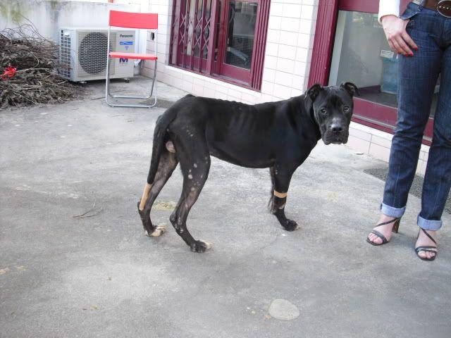 Cão abandonado precisa de dono com urgencia CIMG1340