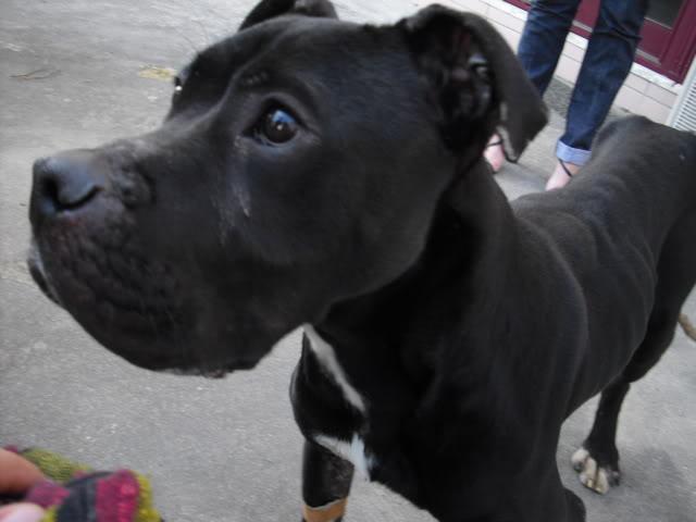 Cão abandonado precisa de dono com urgencia CIMG1344