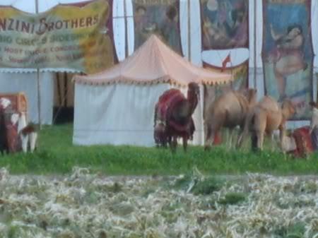 Water for Elephants : Photos  + Vidéos du tournage... S5005177